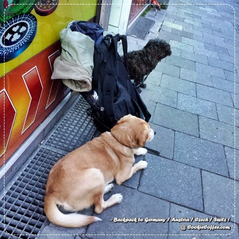 dog-backpacker-guard-homeless-germany-munich-lost-truth-bag-suitcaser