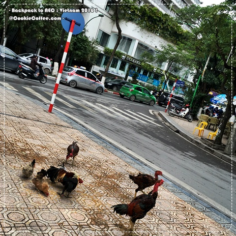 vietnam-2016-aec-hanoi-ho-chi-minh-chicken-hen-cock-road-ecopark-dirty-meme-taxi