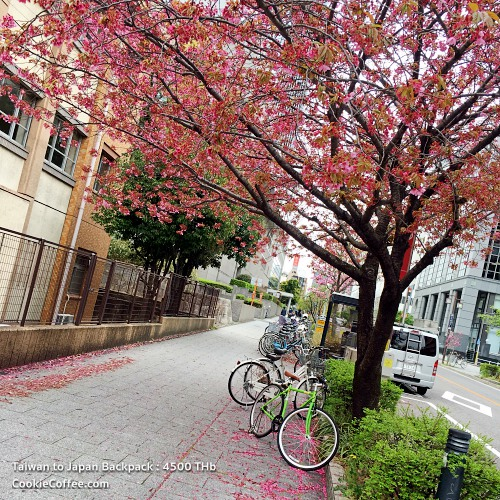 sakura-cherry-blossom-hanami-road-nagoya-backpack-iphone-6s-se