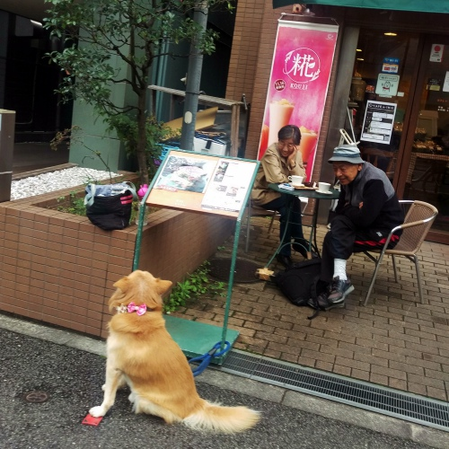 cafe-de-crie-review-free-wifi-outdoor-tokyo-university-japan-dog-cute-old-yanaka-maps