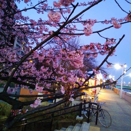 tullys-coffee-best-most-beautiful-review-sumida-park-river-sakura-tokyo-skytree-night-bloom