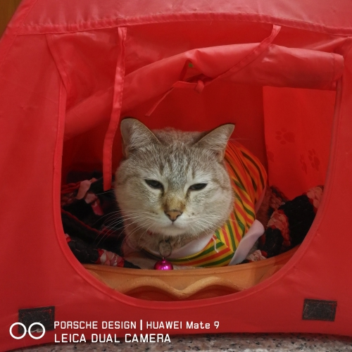 porsche-design-mate-9-pro-10-huawei-leica-homeless-tent-cat-winter-scarf-red